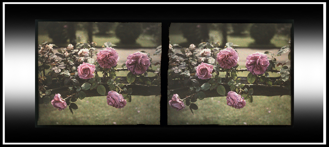 Autochrome Stereoviews
